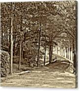 Summer Lane Sepia Canvas Print