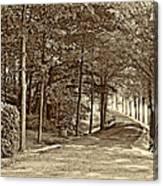 Summer Lane Sepia Canvas Print