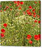 Summer Meadow Background Canvas Print