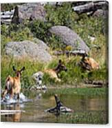 Summer Morning Dip - Elk In Yellowstone National Park - Wyoming Canvas Print