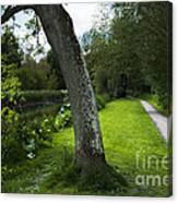 Summer Path Canvas Print