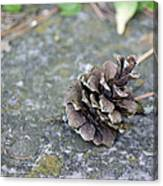 Summer Pinecone Canvas Print
