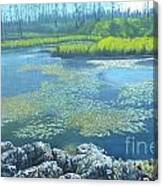 Summer Pond Canvas Print