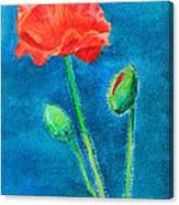 Summer Poppy Canvas Print