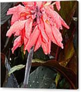 Summer Rain In Maryland Canvas Print