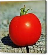 Summer Red Tomato Canvas Print