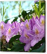 Summer Rhodies Flowers Purple Floral Art Prints Canvas Print