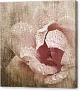 Summer Rose #1 Canvas Print
