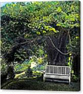Summer Shade 4 Canvas Print