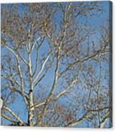Summer Sky Winter Day Canvas Print