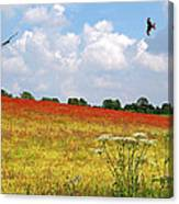 Summer Spectacular - Red Kites Over Poppy Fields Canvas Print