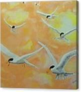 Summer Terns Canvas Print