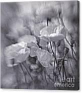 summer whipsers IIII Canvas Print