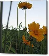 Summer Wild Flowers Canvas Print