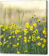 Summer Wildflowers On The Rim  Canvas Print