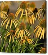 Summer Yellow Echinacea Flowers Canvas Print