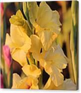 Summer Yellow Gladiolus Canvas Print