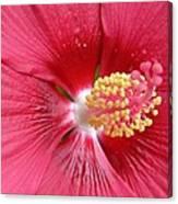 Summerific Cranberry Crush 06 Canvas Print