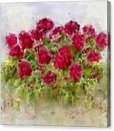 Summer's Blush Canvas Print