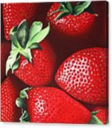 Summer's Bounty Canvas Print