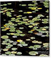 Summer's End Lily Pads Canvas Print