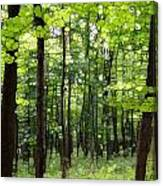 Summer's Green Forest Abstract Canvas Print