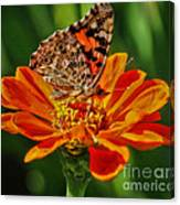 Summers Last Butterfly Canvas Print