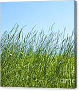 Summertime Grass Canvas Print