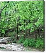 Summertime Walnut Creek Canvas Print
