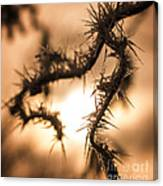 Sun And Frost Canvas Print
