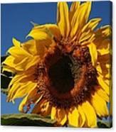 Sun Blessed Canvas Print