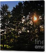 Sun Burst Through The Trees Canvas Print