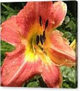Sun Day Lilly  Canvas Print