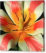 Flower Of Velvet Canvas Print