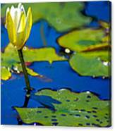 Sun Drenched Lilly  Canvas Print