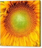 Sun Flower Power Canvas Print