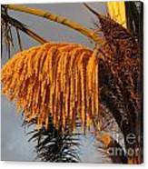 Sun Glowing Palm Canvas Print
