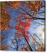 Sun In Fall Forest Canopy  Canvas Print