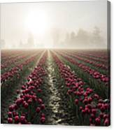 Sun In Fog And Tulips Canvas Print