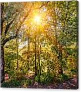 Sun In The Autumn Forest Canvas Print