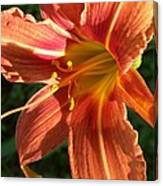 Sun Kissed Daylily Canvas Print