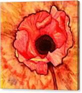 Sun Kissed Poppy Canvas Print