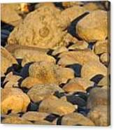 Sun Kissed Rocks Canvas Print