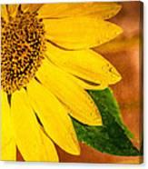 Sun-kissed Sunflower Canvas Print