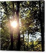 Sun Kissed Trees Canvas Print