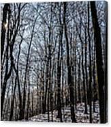 Sun Lit Frozen Rain 3 Canvas Print