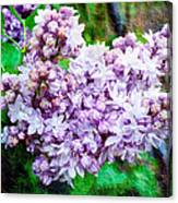 Sun Lit Lilac The Sweet Sign Of Spring Canvas Print