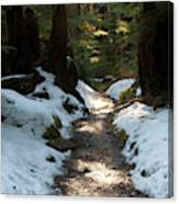 Sun Lit Trail, Olympic National Park Canvas Print