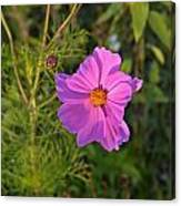 Sun Lit Wildflower Canvas Print