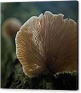 Sun On A Mushroom Canvas Print